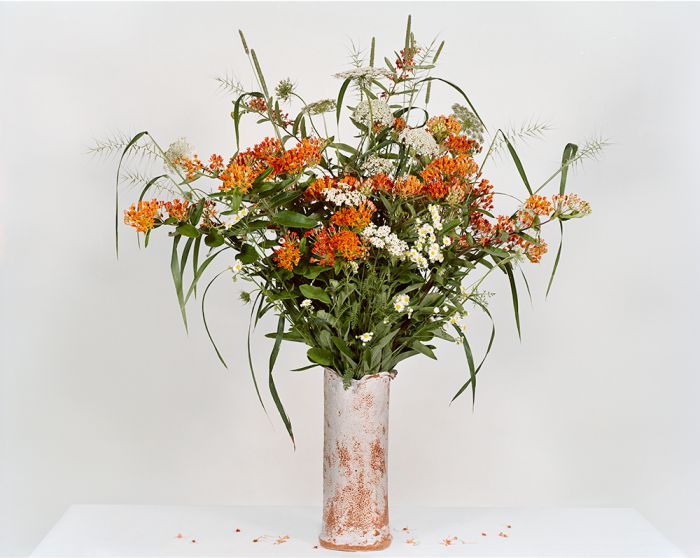 Asclepias Tuberosa, Timothy-grass, Fleabane, Yarrow, Queen Anne's Lace, Eastern Bottlebrush, 45-1307-13, Archival Pigment Print—8x10, 16x20, 32x40, 40x50