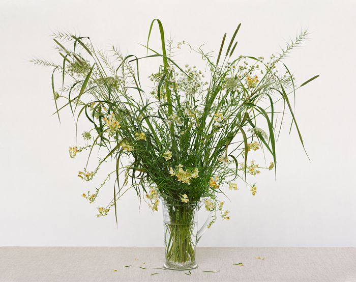 Linaria Vulgaris, Timothy-grass, Queen Anne's Lace, Fleabane, Eastern Bottlebrush, 45-1307-17, Archival Pigment Print—8x10, 16x20, 32x40, 40x50