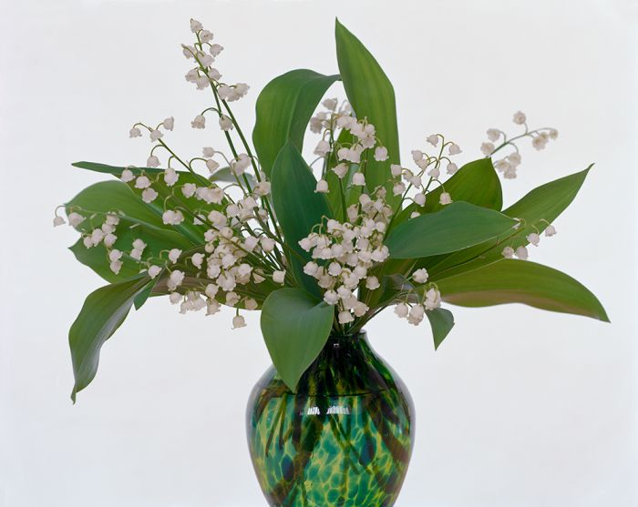 Lily of the Valley, 45-1205-08, Archival Pigment Print—8x10, 16x20, 32x40, 40x50