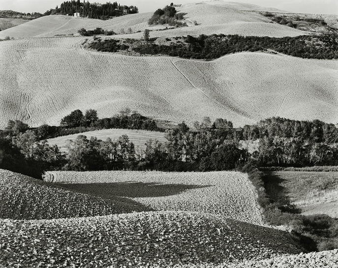 "Near Asciano, 2001, T81-1019-40-40, 8""x10"" silver chloride contact print"