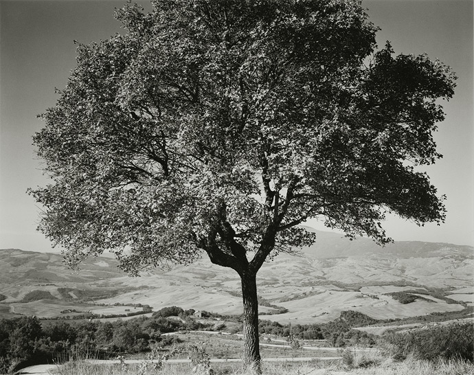 "Val d'Orcia, 2001, T81-0109-64-64, 8""x10"" silver chloride contact print"